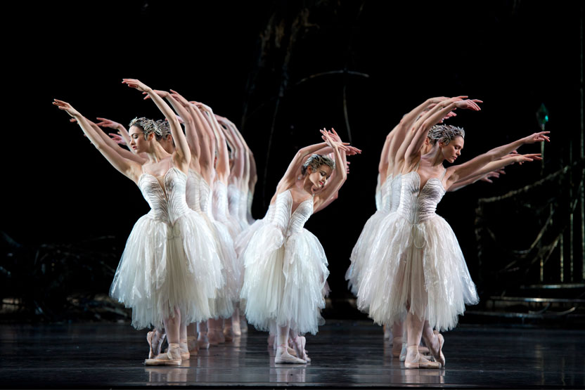 Swan Lake – Welcome Performance